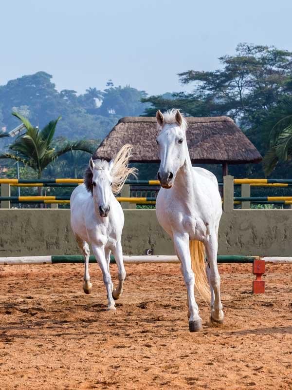 equestrian-centre