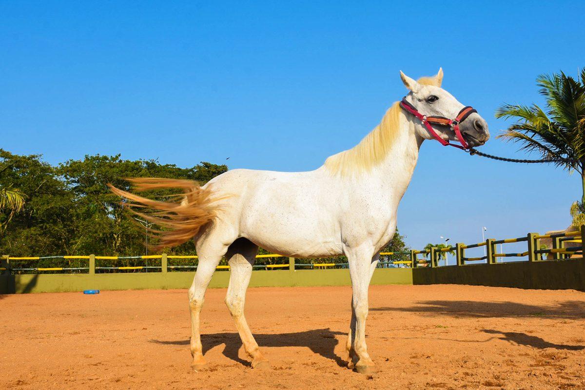 Munyonyo Commonwealth Equestrian